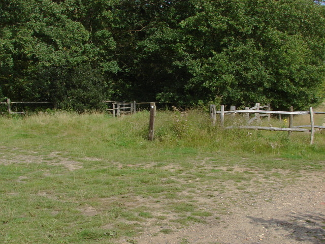 The Fox Way, Merrist Wood