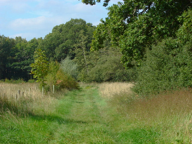 The Fox Way, Merrist Wood