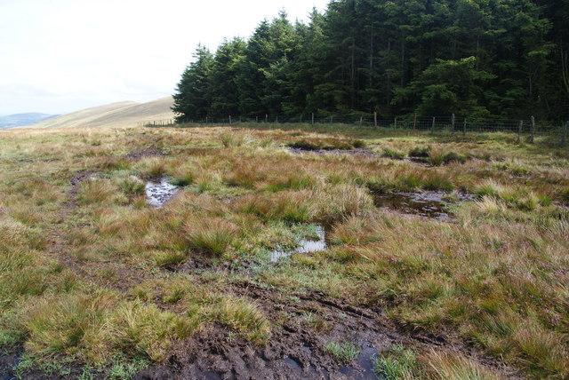 Welsh bog by Pantmaenog Forest