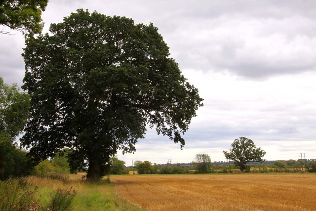 Tree by the field