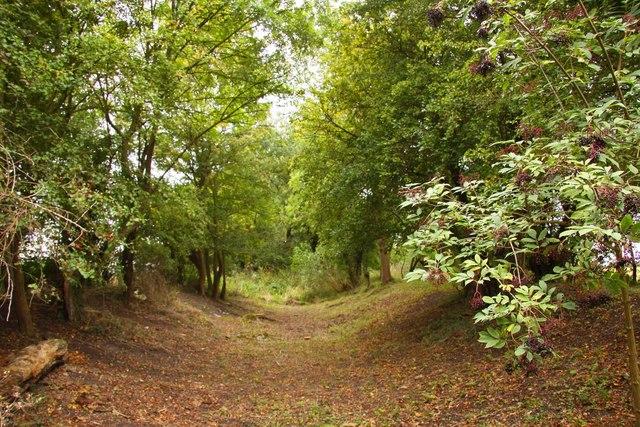 The former Wilts & Berks Canal near Steventon