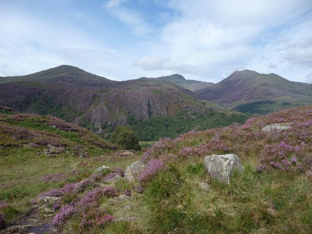 Heather moor between Llyn Dinas and the Nanmor Valley
