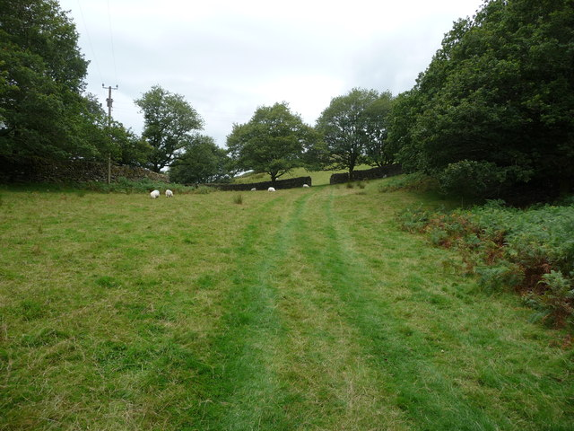 Footpath in sheep pasture with dry stone walls