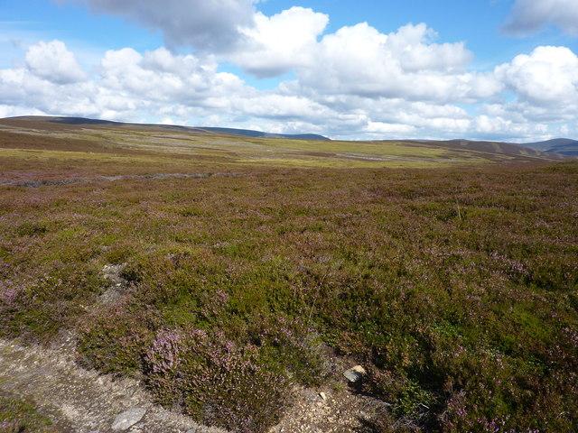 Moorland bogs feeding the Crathie Burn