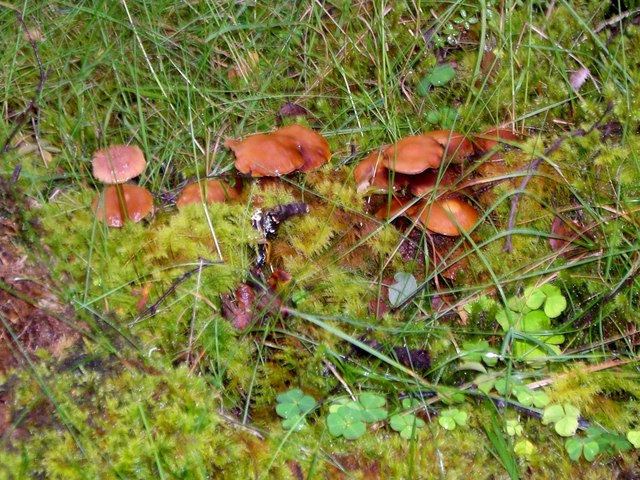 Fungi near Rearquhar