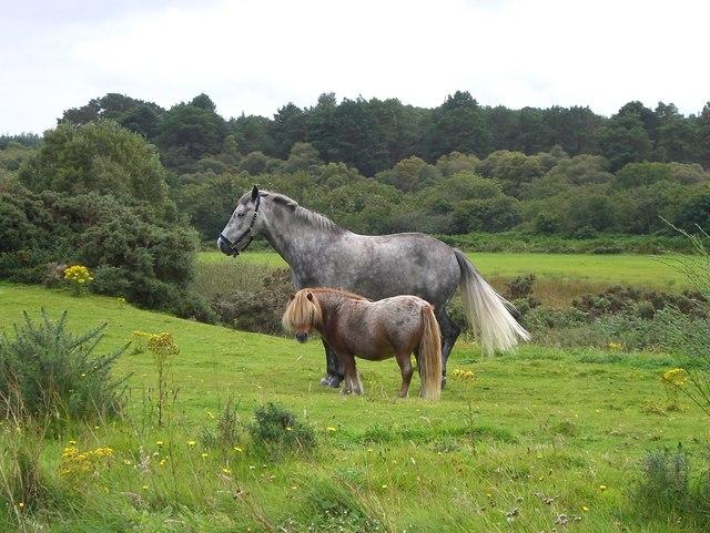 Horse and pony at Gashagich