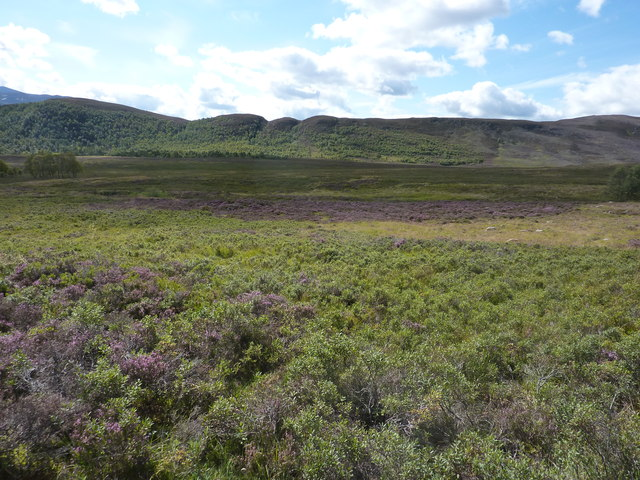 Large patch of bog myrtle, and the catchment area of the Coldrach Burn