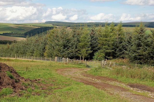 Track entering Lodge Wood