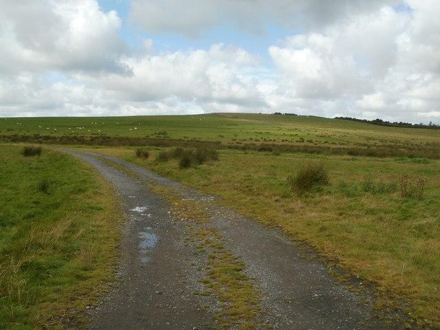 Track through grazing land near Coelbren
