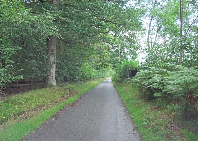 Scratchface Lane north of Miram's Copse