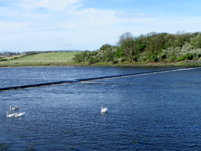 River Coquet near Warkworth
