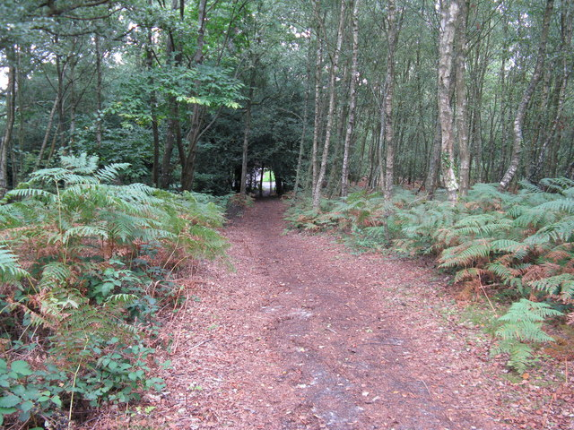 Bridleway off the A272 leading to Trotton Common
