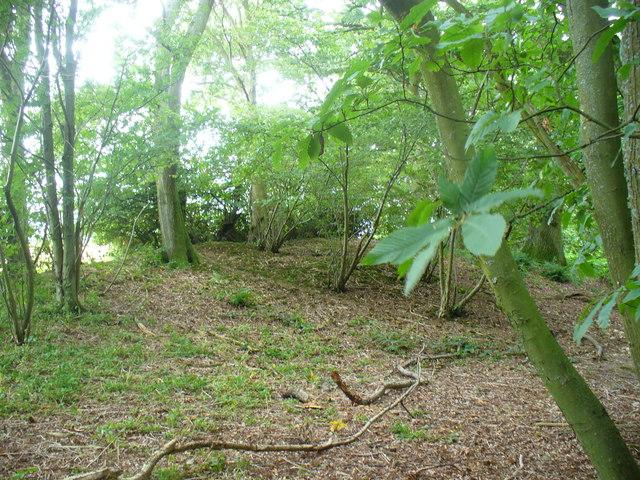 Tumulus in Little Wood Copse