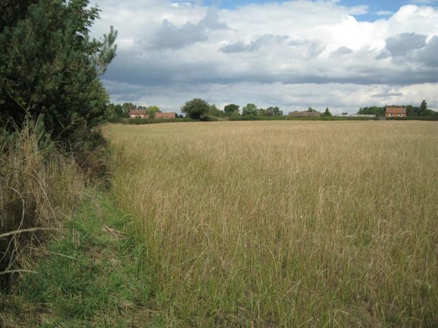 Field of ryegrass near Marsh Farm