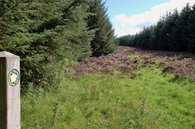 Forest ride, Hen Toe Burn Wood