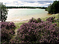 TF6719 : Heather above the lake, Bawsey Country Park by Evelyn Simak