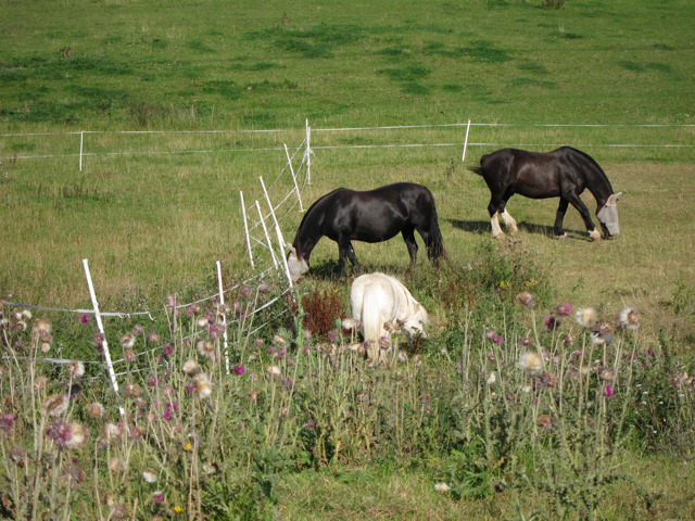 Horses at Mile Oak Farm