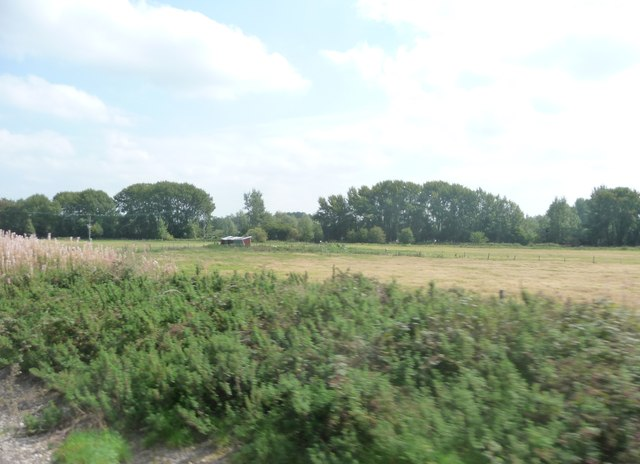 West Berkshire : Grassy Field & bushes