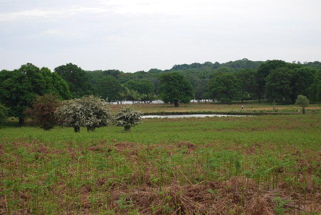 Leg of Mutton Pond, Richmond Park