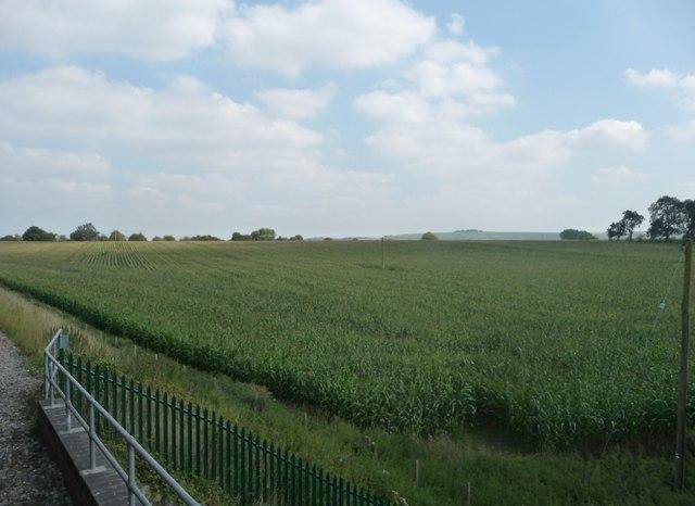 Kennet : Grassy Field