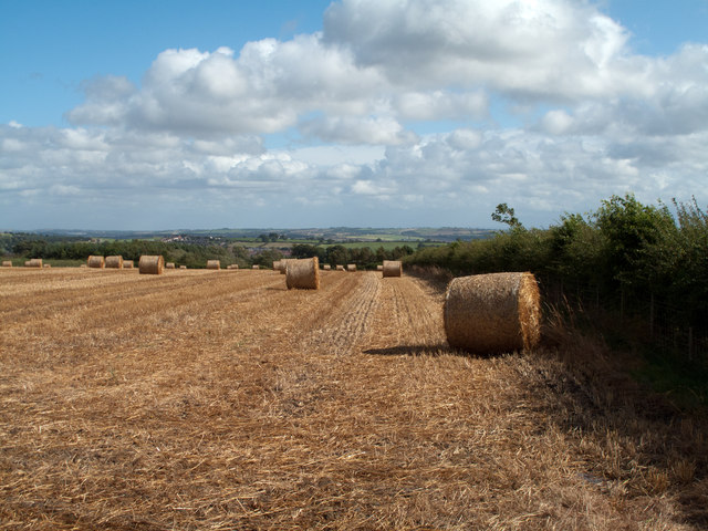 Rolls of straw in field near Crook