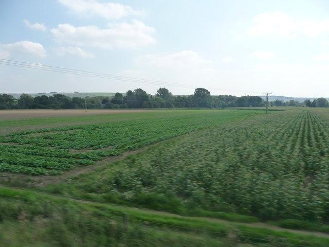 Kennet : Grassy Fields