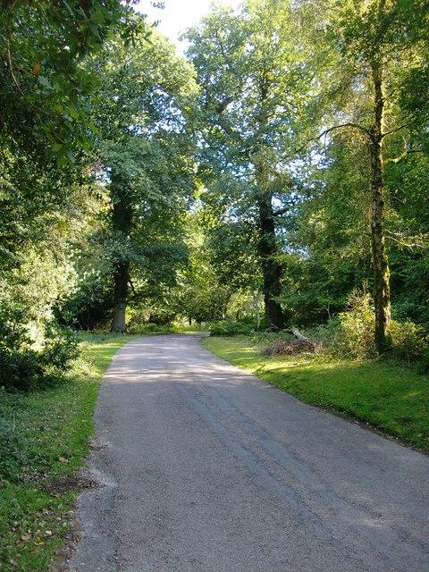 Minor road through woodland near Castle Malwood, New Forest