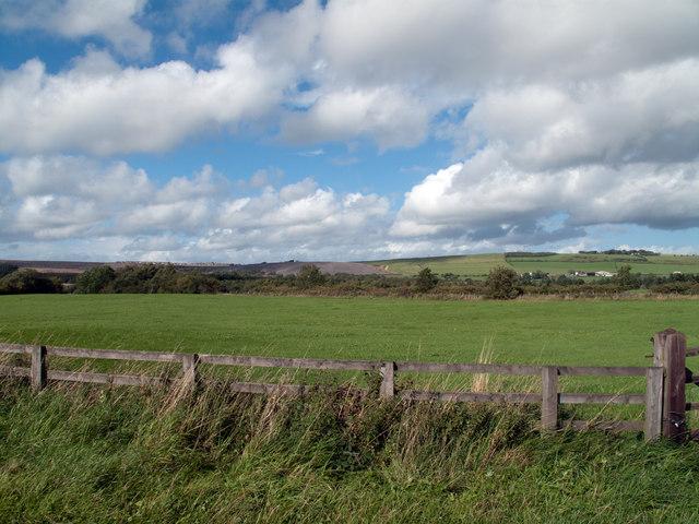 Fields north from West Roddymoor
