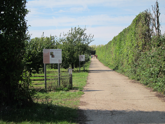 Orchards at Brogdale Farm
