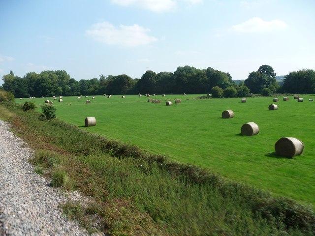 West Wiltshire : grassy field