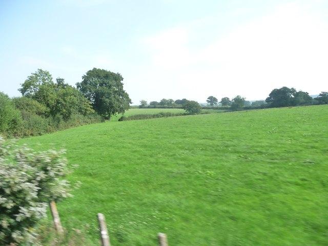 Mendip : Grassy Field