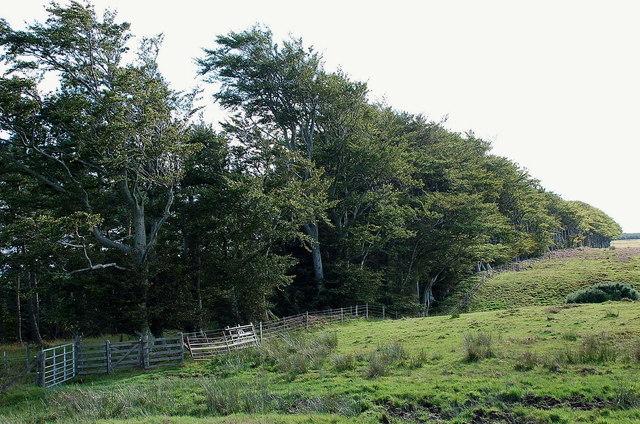 Jeanie's Wood