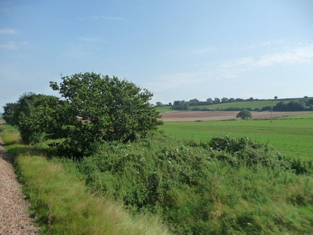 South Somerset : Grassy Field & Bushes