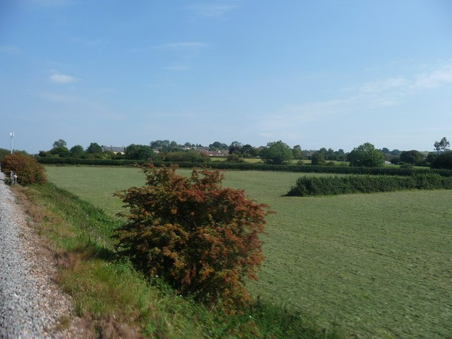 South Somerset : Grassy Field