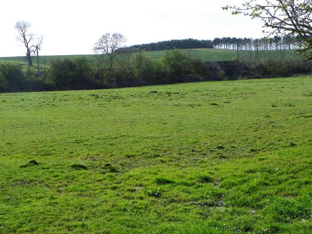 Pasture near Longhoughton