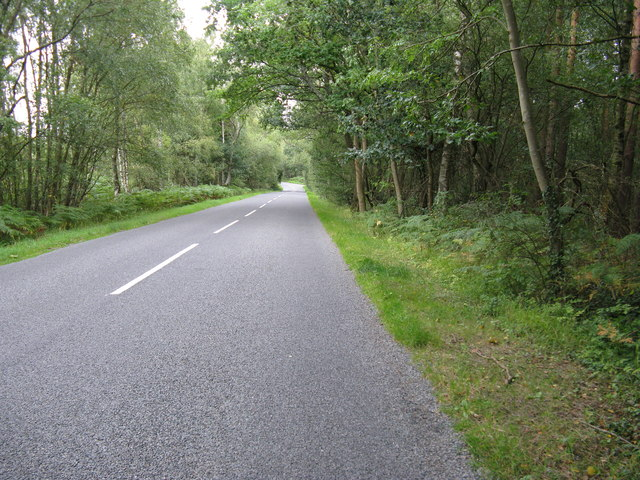 Elsted Road approaching Stedham Common