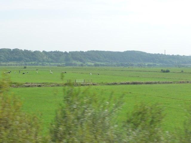 Taunton  Deane : Grassy Fields