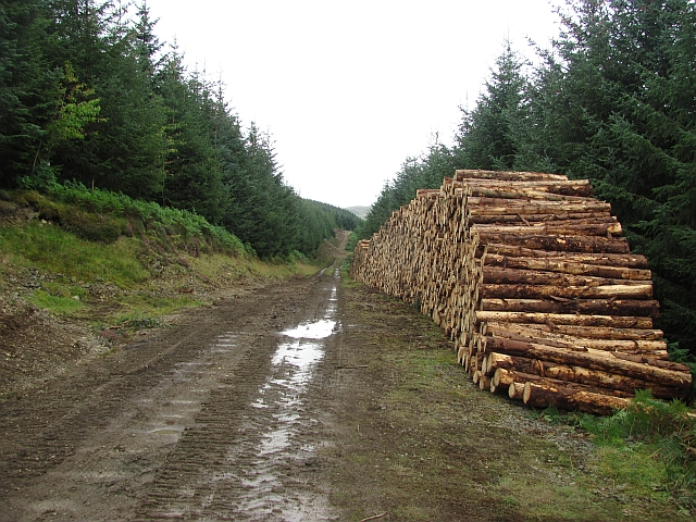 Log pile, Rough Side