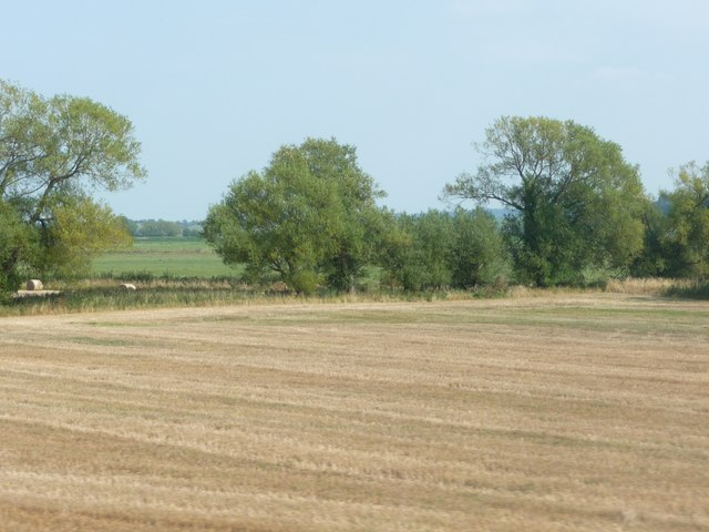 Taunton Deane : Ploughed Field