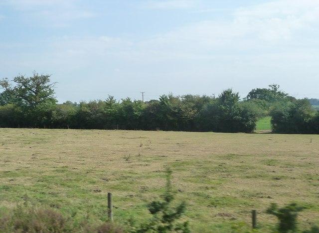 Taunton Deane : Grassy Field