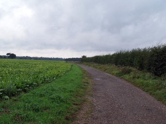 Track to Mareham Moor