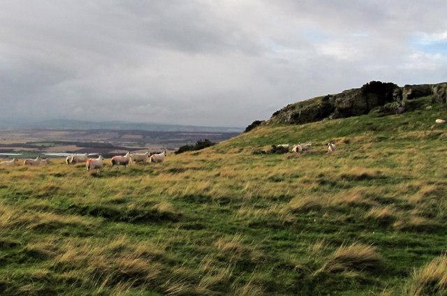 Boghall Hill