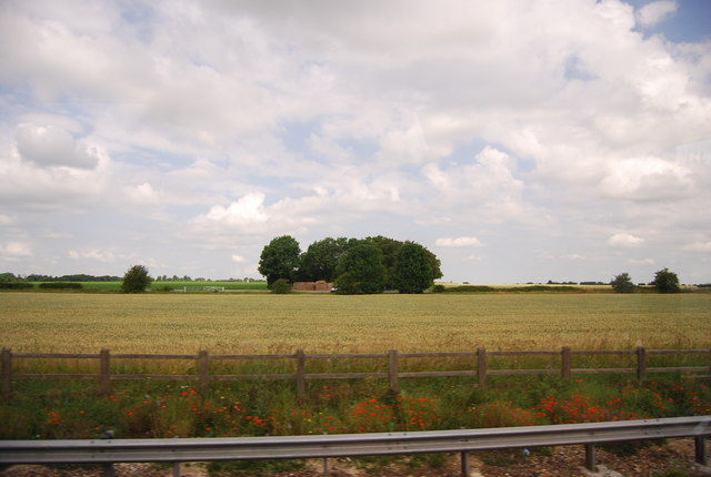 Wheat field between A14 and Heath Rd