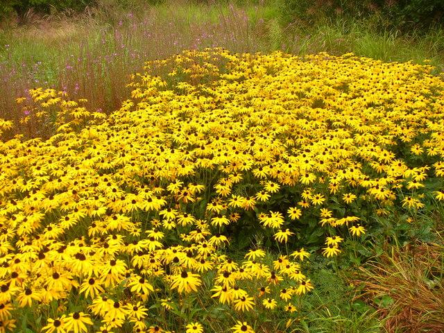 Sustainable Garden Flowers