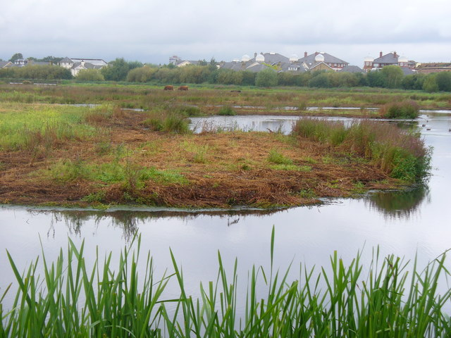 Water Meadows, Barnes