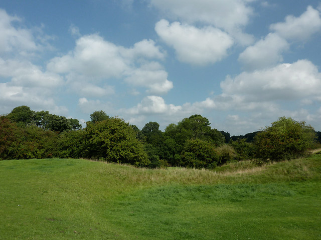 Pasture and trees near Rode Heath, Cheshire