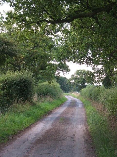 Lane to Oak Tree Farm