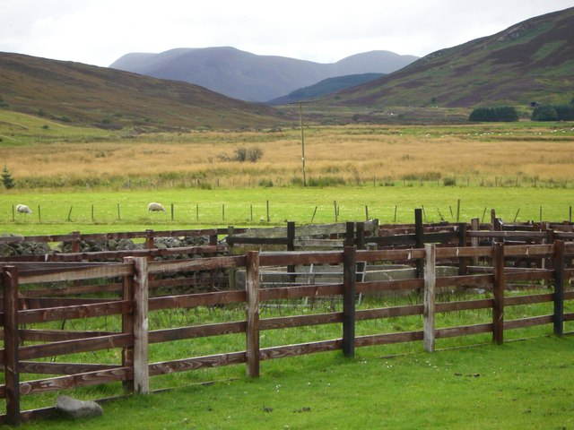 Sheep pens at Achosnich