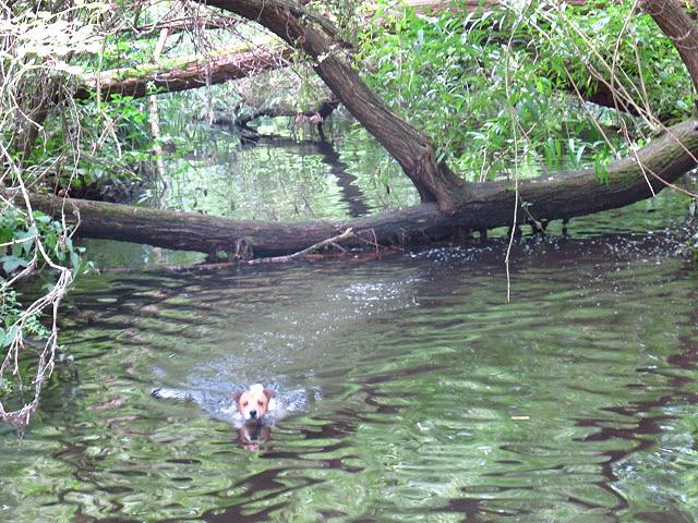 Phoenix takes a dip