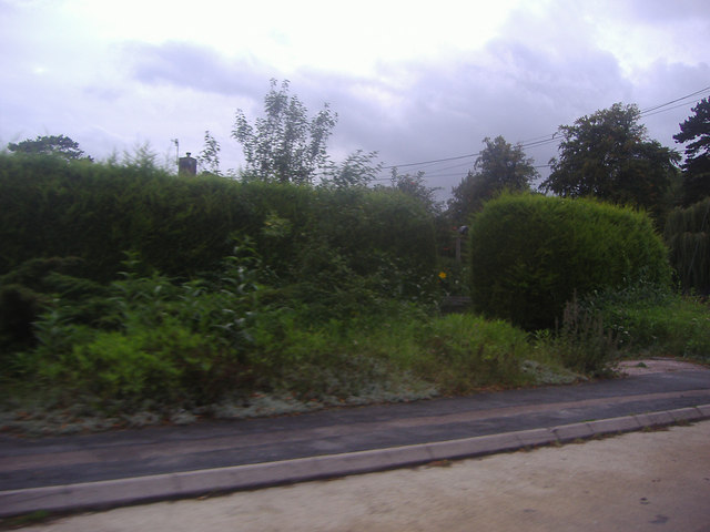 Hedge and garden by A25, Buckland